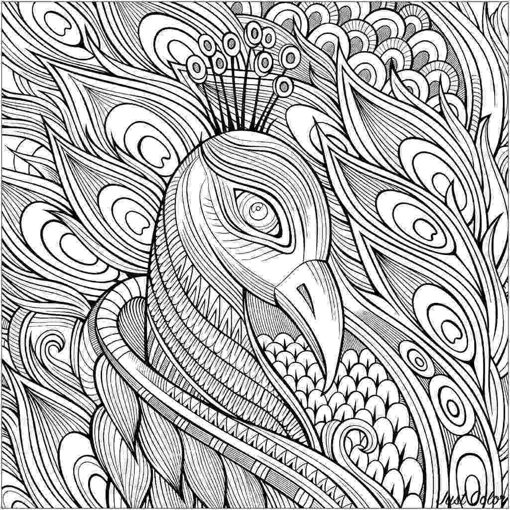 colouring picture of peacock printable peacock coloring pages for kids cool2bkids colouring picture peacock of