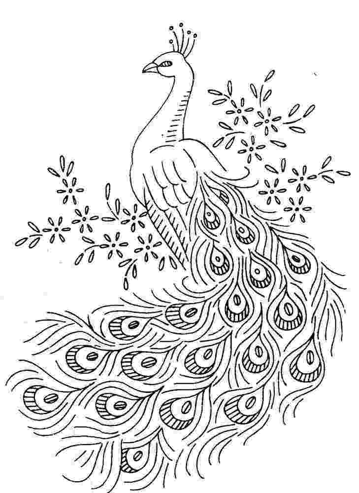 colouring picture of peacock printable peacock coloring pages peacock drawing peacock picture of colouring