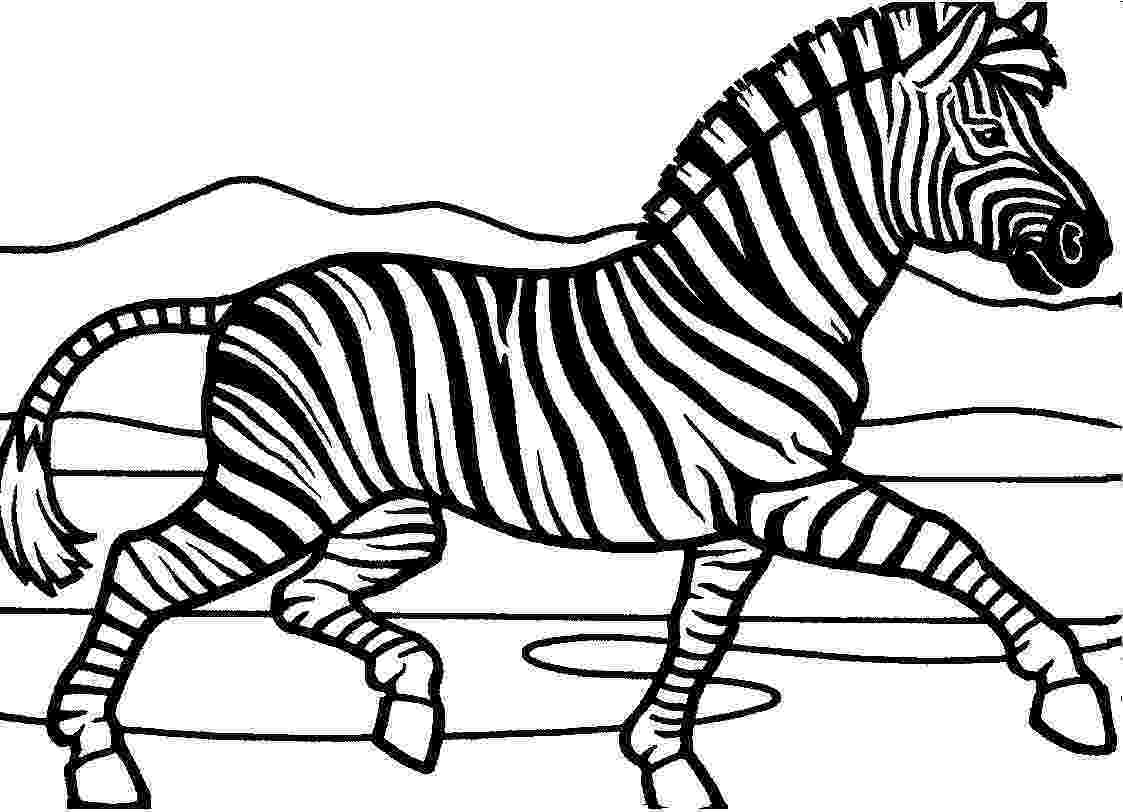 colouring picture of zebra free printable zebra coloring pages for kids animal place zebra picture of colouring