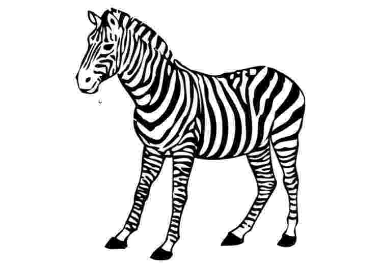 colouring picture of zebra free printable zebra coloring pages for kids colouring of picture zebra 1 1