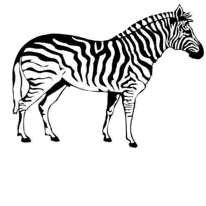 colouring picture of zebra free printable zebra coloring pages for kids colouring of picture zebra 1 2