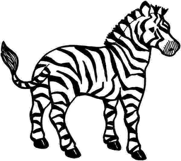 colouring picture of zebra zebra coloring pages free download best zebra coloring zebra of picture colouring