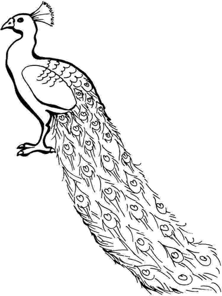 colouring pictures of peacock peacock coloring pages coloring pages to download and print of pictures peacock colouring