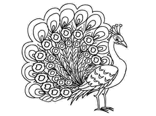 colouring pictures of peacock peacock only coloring pages pictures peacock of colouring