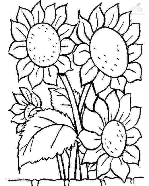 colouring pictures of plants butterflies on flowers coloring page free printable of plants colouring pictures