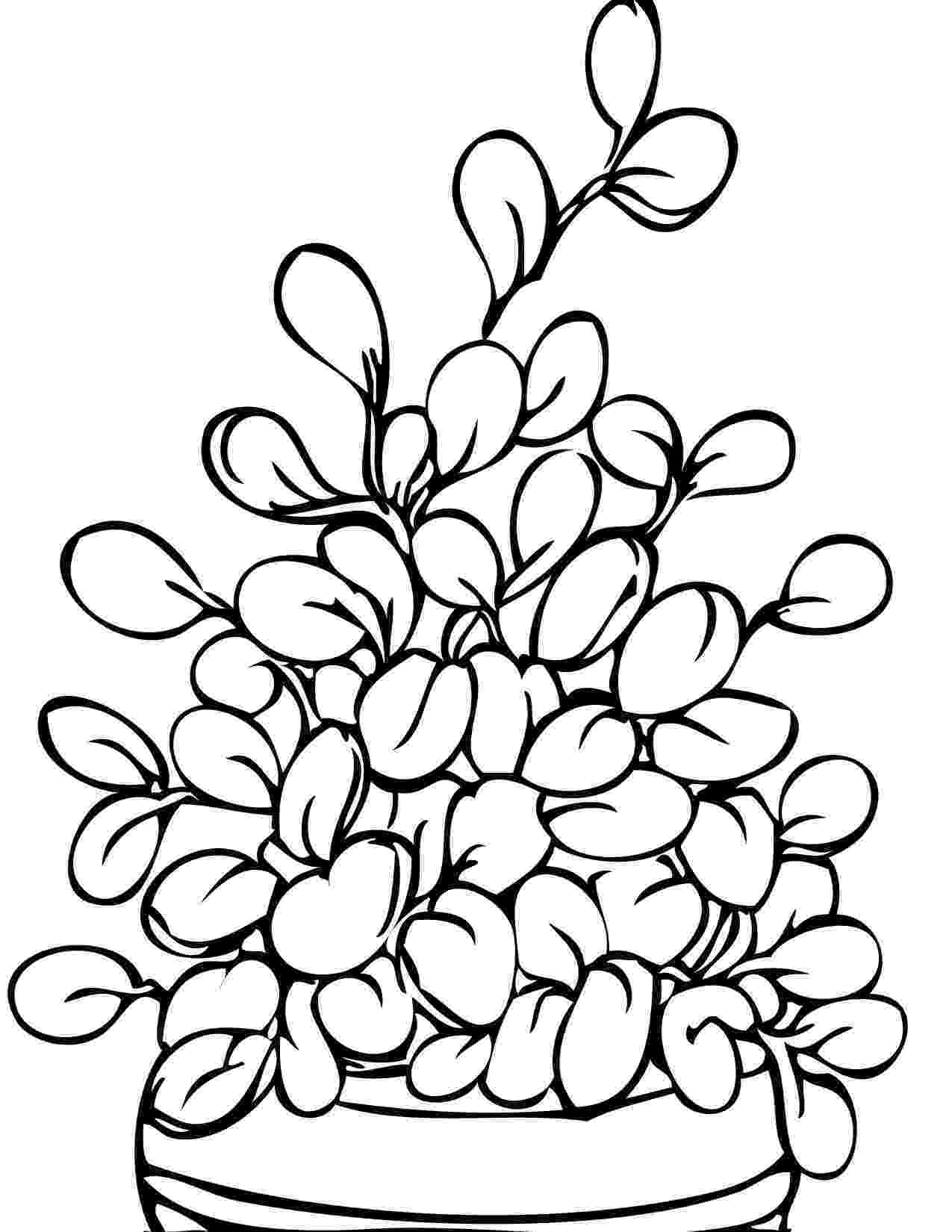 colouring pictures of plants plant coloring pages to download and print for free colouring pictures plants of
