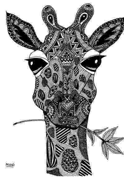 colouring sheet giraffe 10 toothy adult coloring pages printable off the cusp colouring giraffe sheet