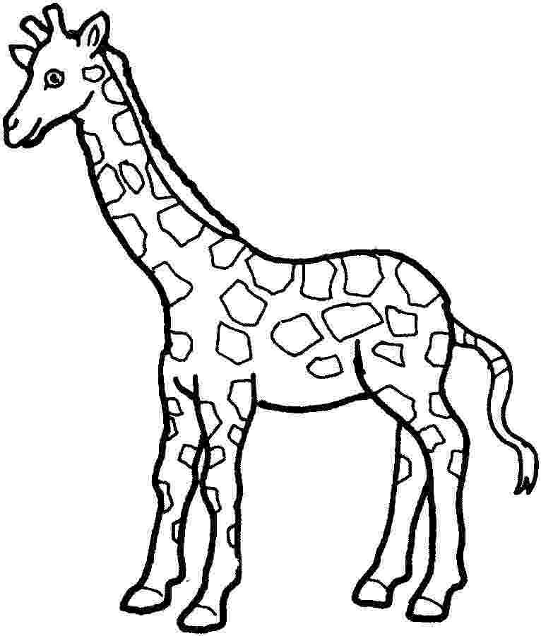colouring sheet giraffe free giraffe coloring pages colouring sheet giraffe