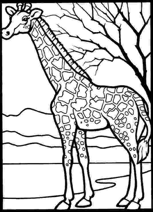 colouring sheet giraffe giraffe coloring pages giraffe sheet colouring