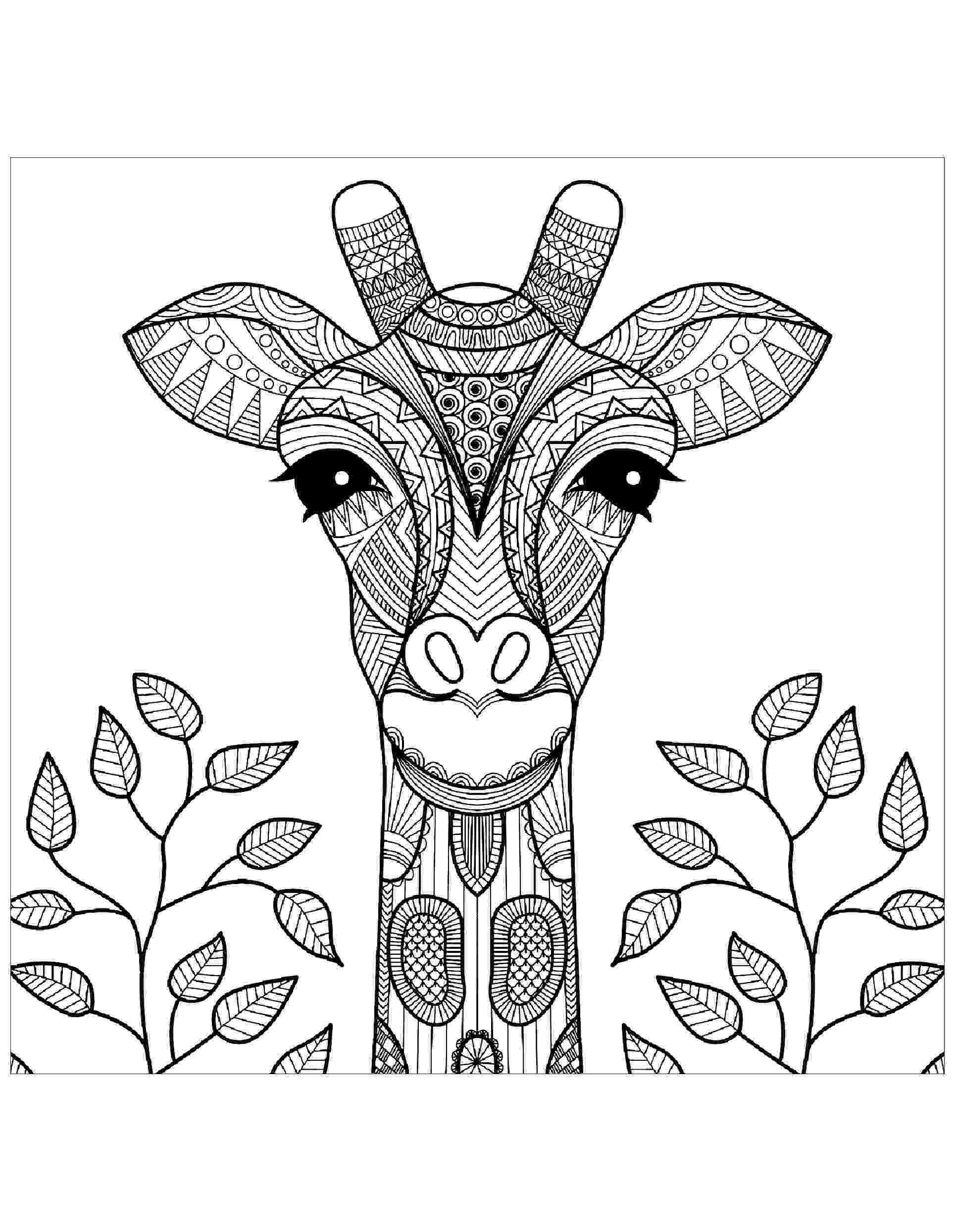 colouring sheet giraffe learning friends ms giraffe coloring printable sheet giraffe colouring