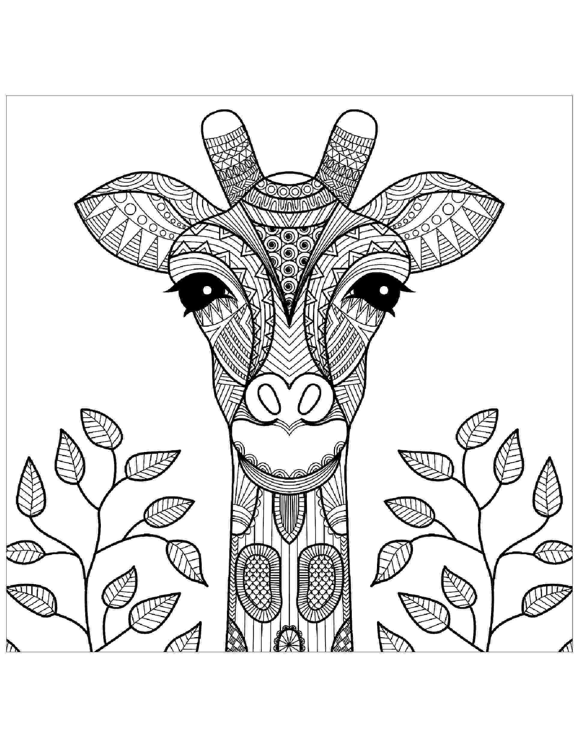 colouring sheet giraffe learning friends ms giraffe coloring printable sheet giraffe colouring