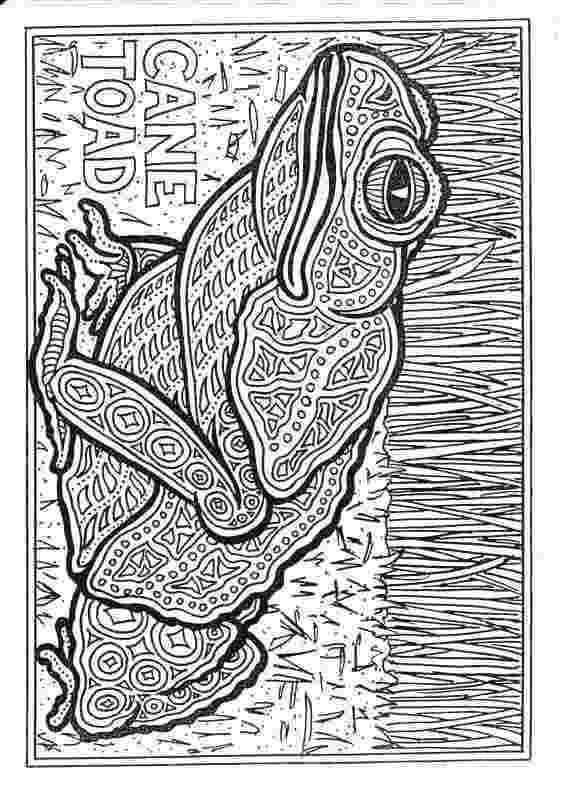 colouring sheets pattern animals colouring books animal coloring pages frog coloring animals pattern colouring sheets