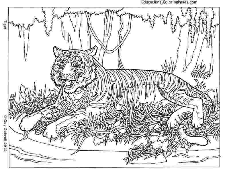 colouring sheets pattern animals pattern animal coloring pages download and print for free pattern animals sheets colouring