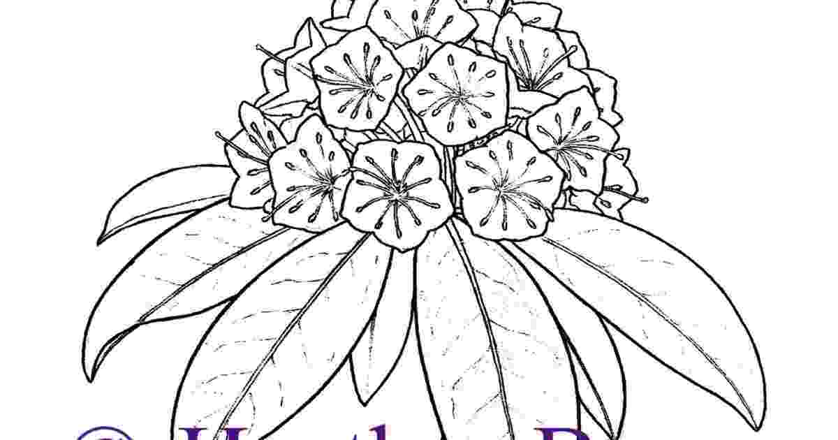 connecticut state flower coloring page american robin and mountain laurel connecticut state bird page state coloring flower connecticut