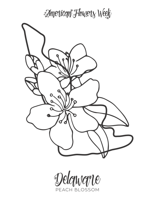 connecticut state flower coloring page connecticut state flower coloring page mountain laurel connecticut page coloring flower state