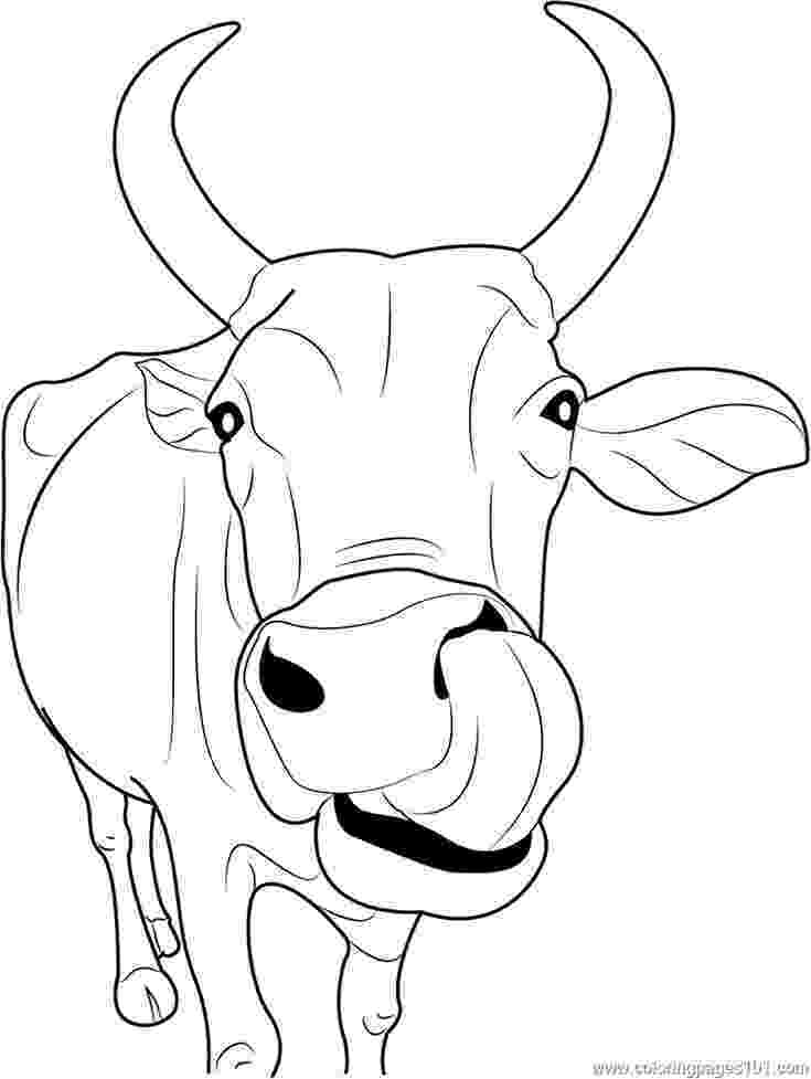 cow coloring pages free printable cow coloring pages for kids cow pages coloring 1 1