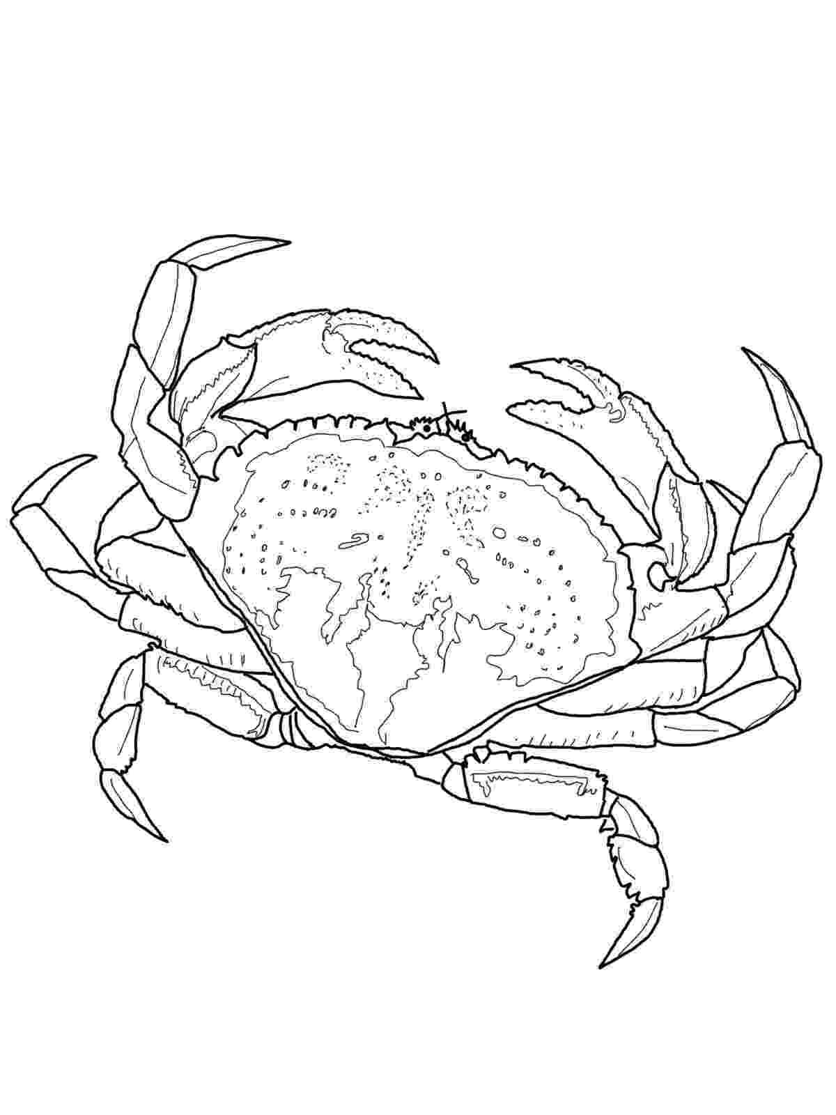 crab pictures to colour free printable crab coloring pages for kids colour pictures to crab