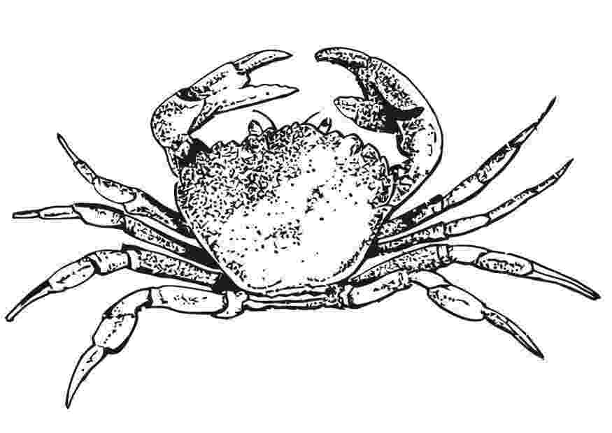 crab pictures to colour free printable crab coloring pages for kids to crab colour pictures
