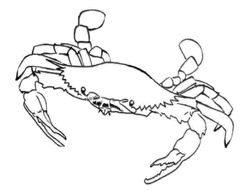 crab pictures to colour free printable crab coloring pages for kids to pictures colour crab