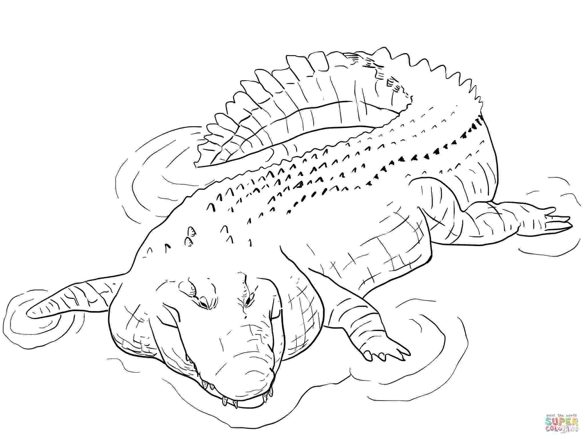crocodile coloring alligators and crocodiles coloring pages download and crocodile coloring