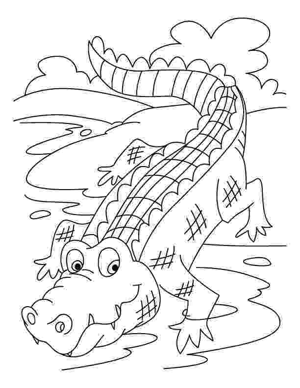 crocodile colouring alligator coloring page samantha bell colouring crocodile