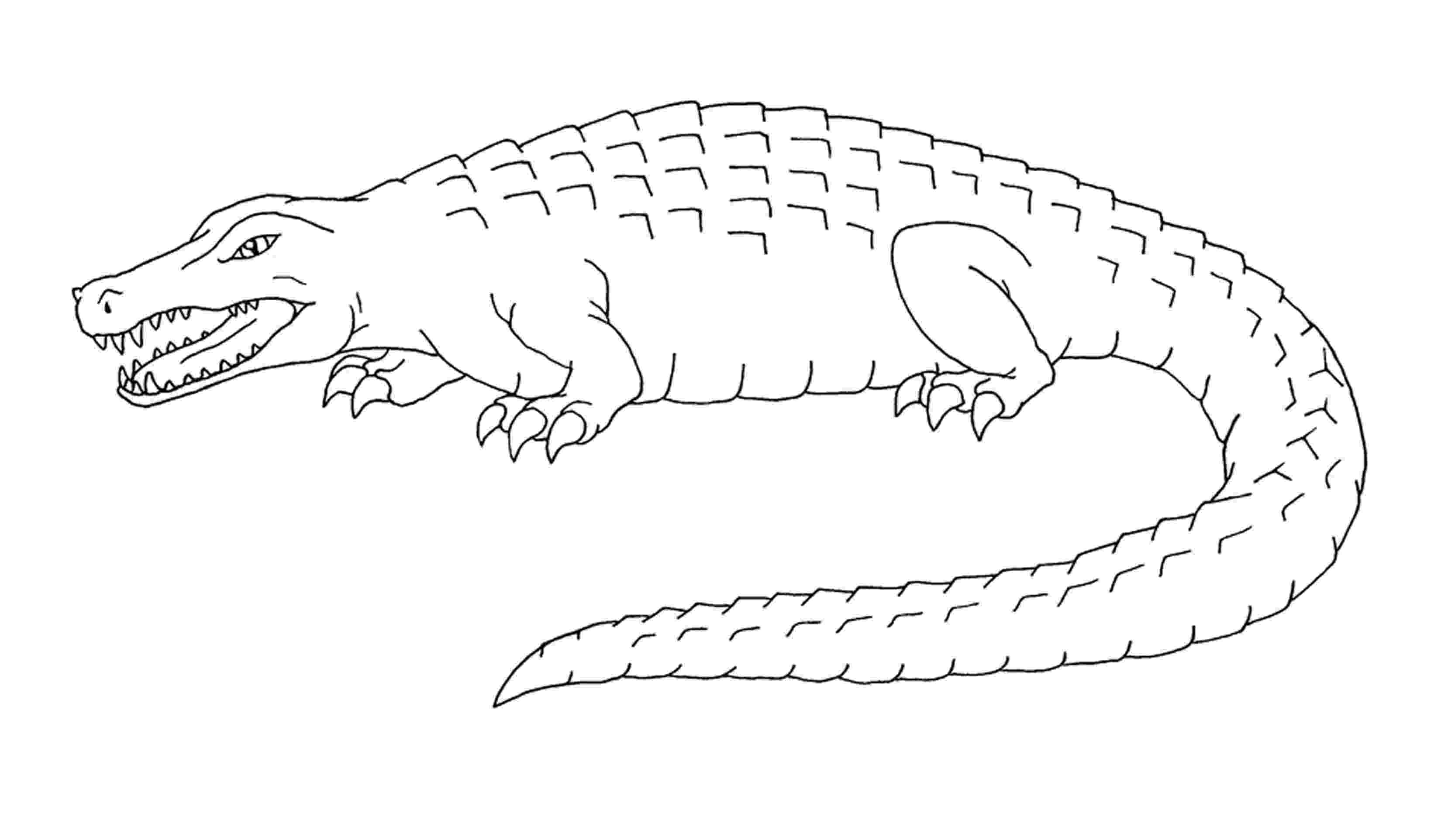 crocodile colouring crocodile outline free download best crocodile outline crocodile colouring