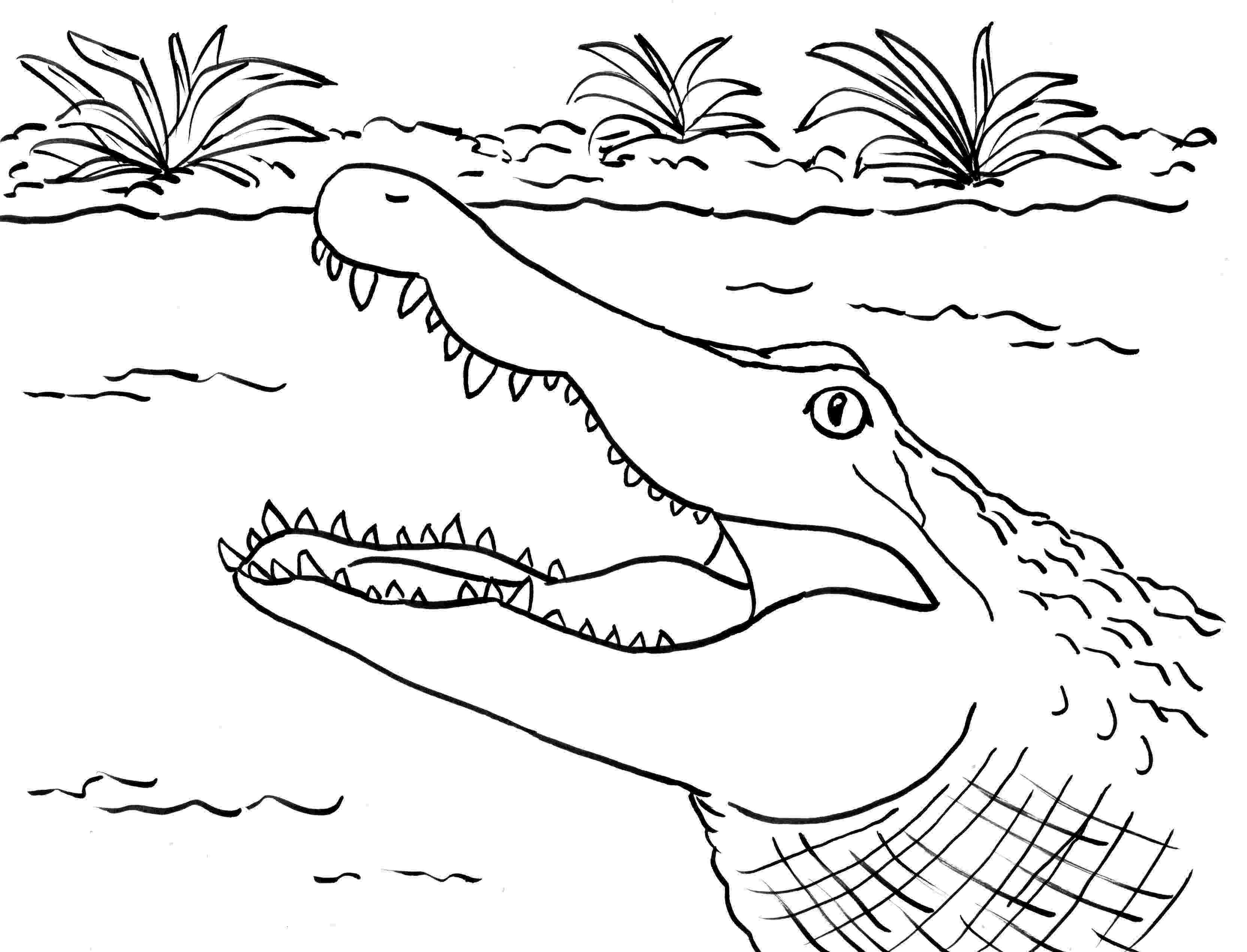 crocodile colouring page alligator coloring page samantha bell crocodile colouring page