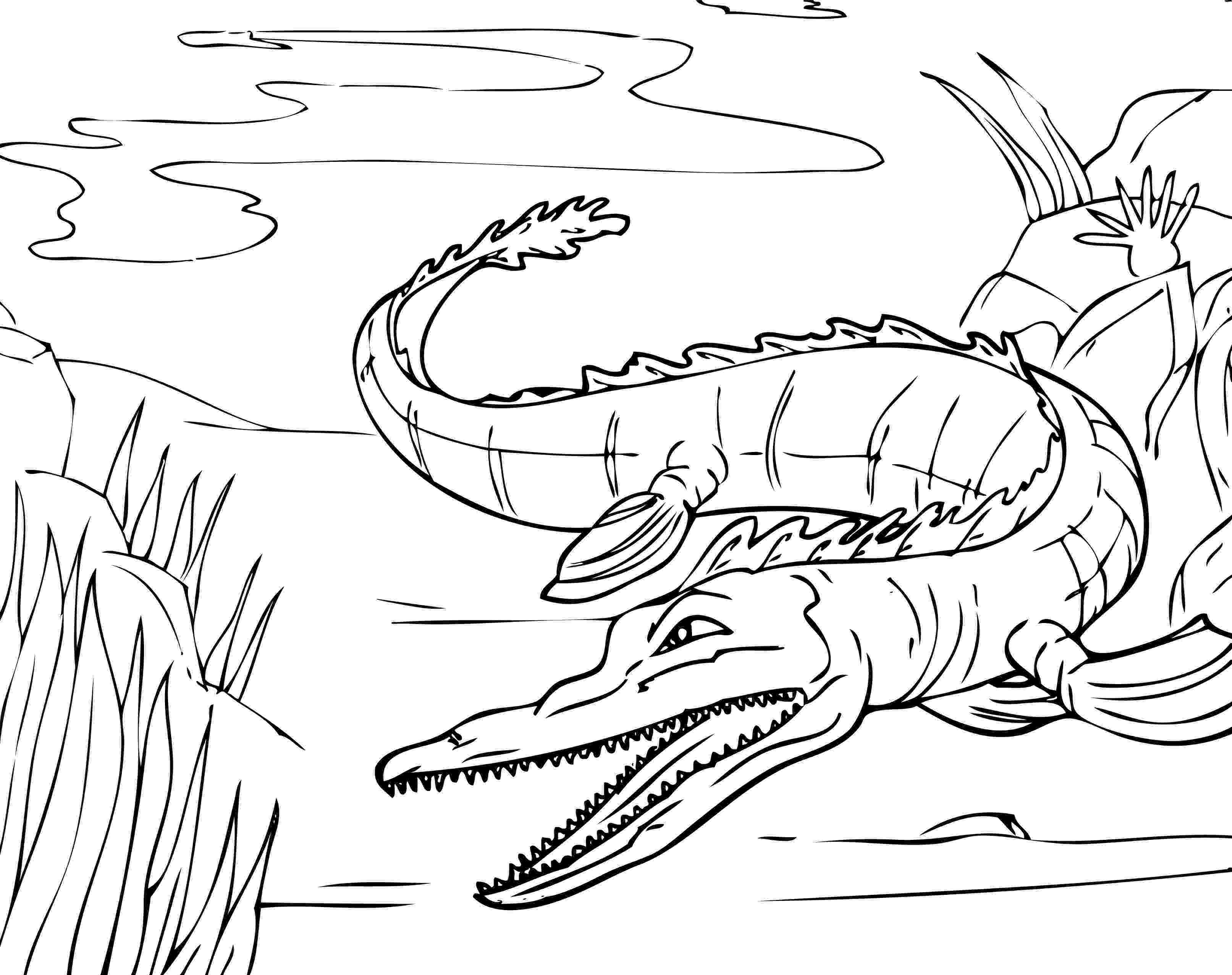 crocodile colouring page alligators and crocodiles coloring pages download and crocodile colouring page