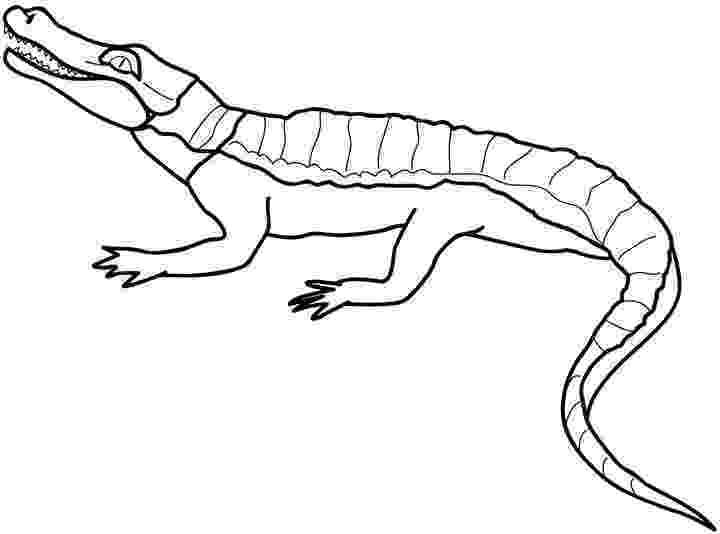 crocodile colouring page free coloring pages crocodiles colouring page crocodile 1 1