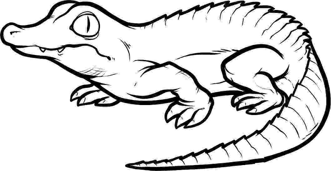 crocodile colouring page free coloring pages crocodiles page colouring crocodile