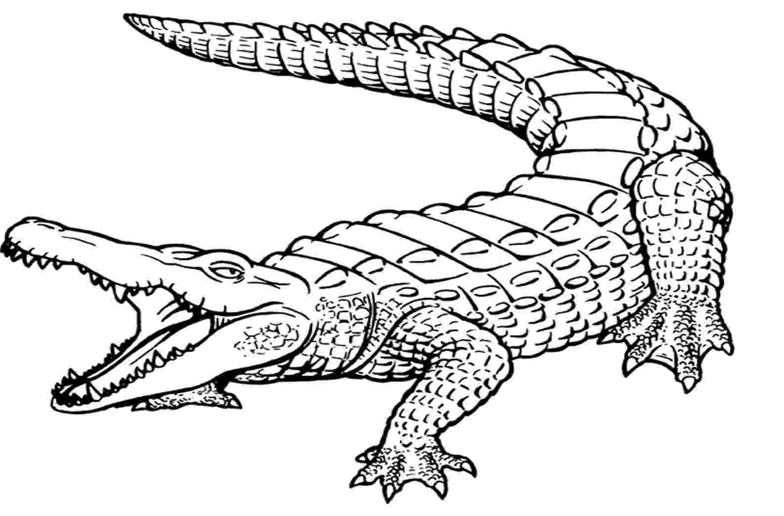 crocodile colouring pictures crocodile drawing for kids at getdrawingscom free for crocodile colouring pictures
