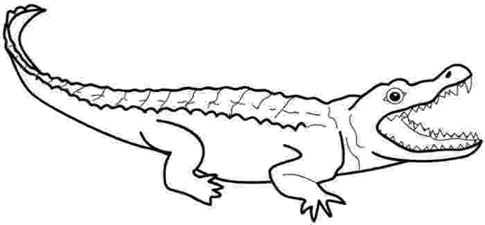 crocodile pictures to colour free printable crocodile coloring pages for kids colour crocodile to pictures