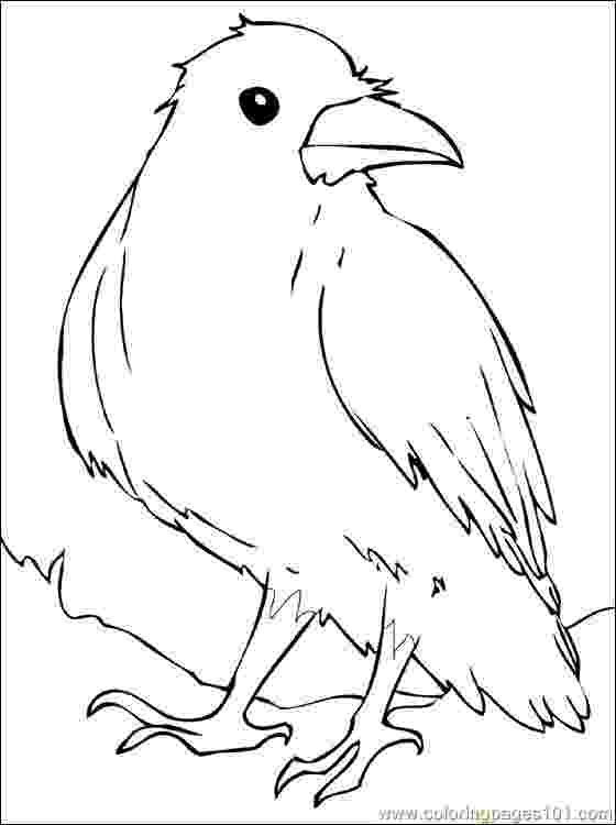 crow printable coloring pages fall crow digital coloring page thanksgiving harvest adult pages printable crow coloring