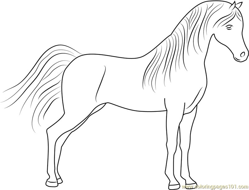 cute horse coloring pages cute little horse coloring pages hellokidscom cute horse pages coloring