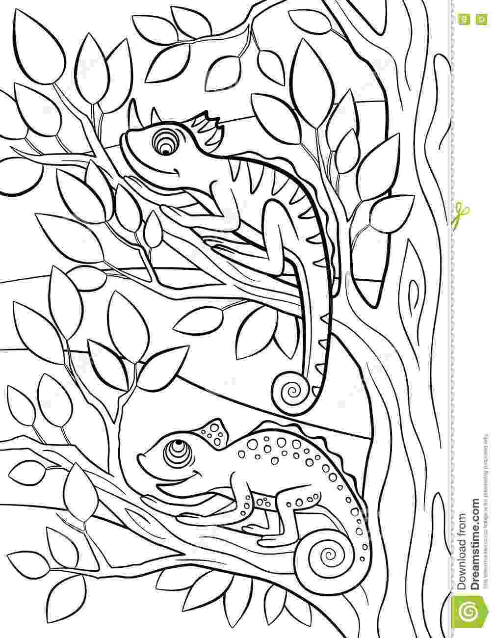 cute wild animals colouring pages wild animal coloring pages animal coloring pages pages animals cute colouring wild