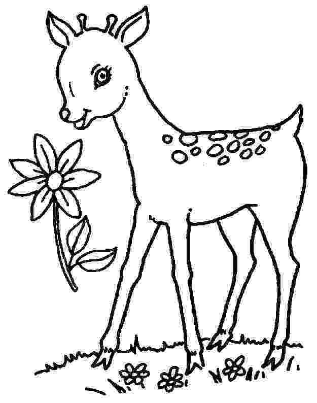 deer color pages 45 deer templates animal templates free premium color pages deer