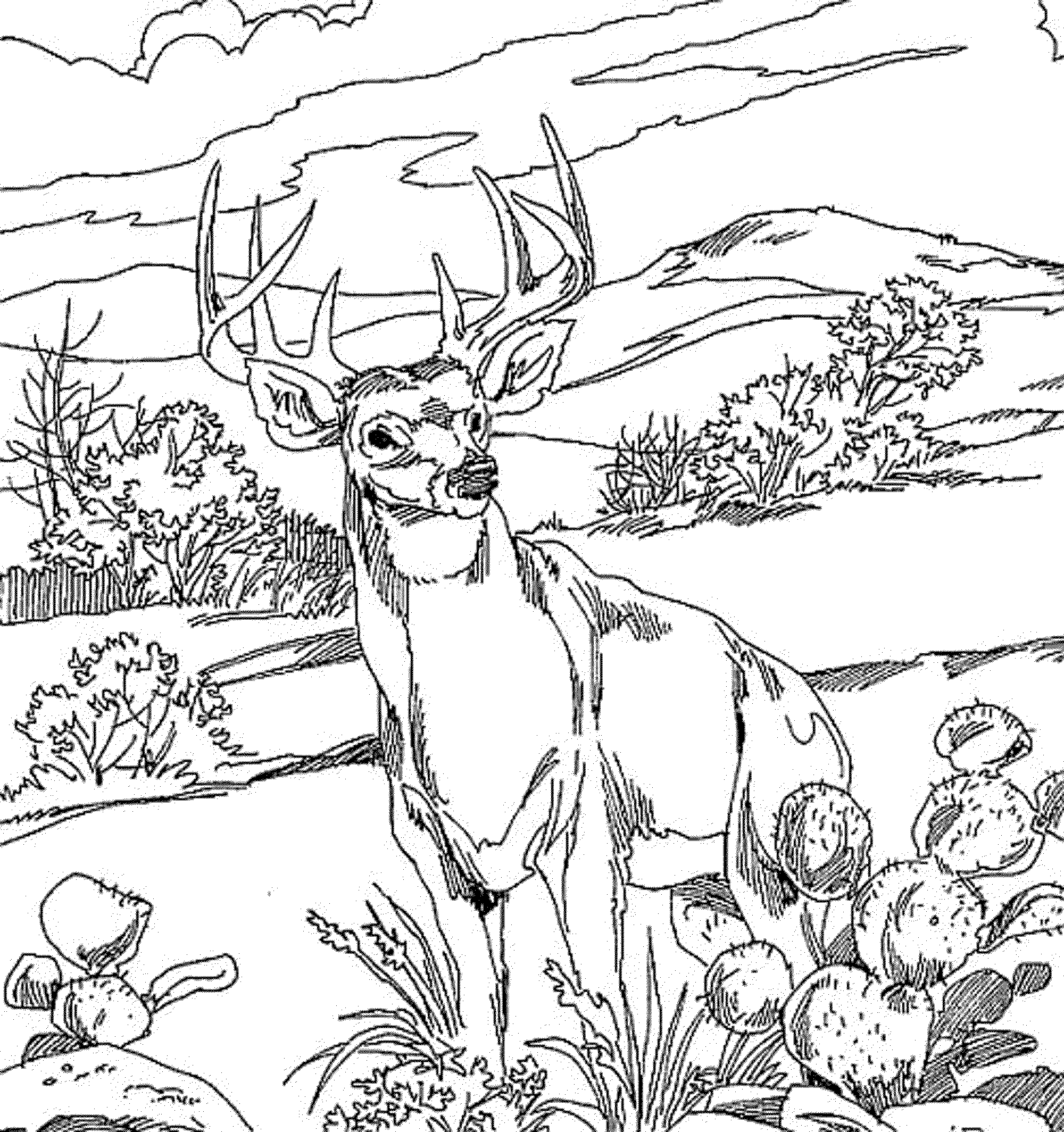 deer color pages coloring pages for kids deer coloring home color pages deer