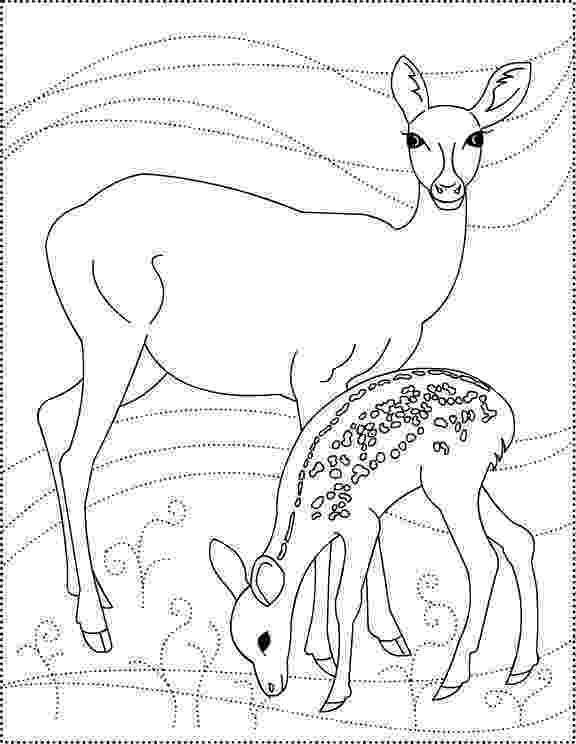 deer color pages crista forest39s animals art 11112 12112 pages deer color