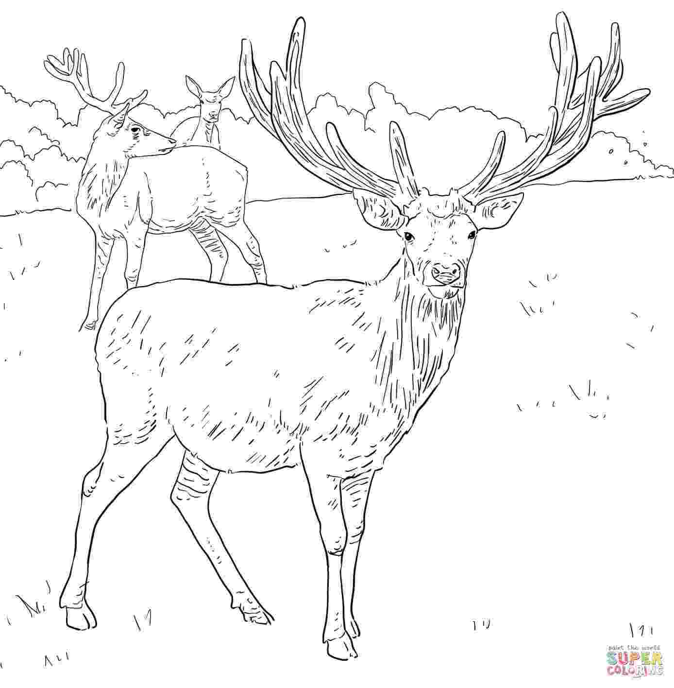 deer color pages deer coloring page wild animal buck deer coloring pages color pages deer