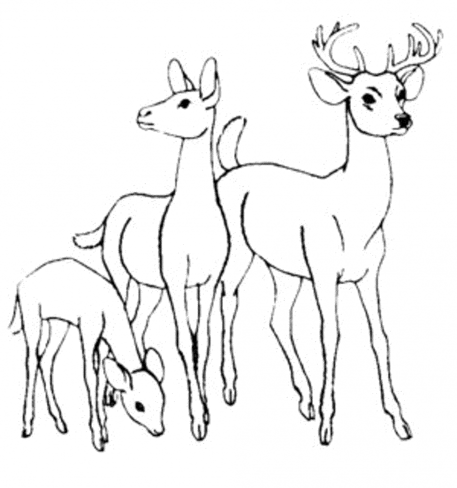 deer color pages deer coloring pages getcoloringpagescom color pages deer