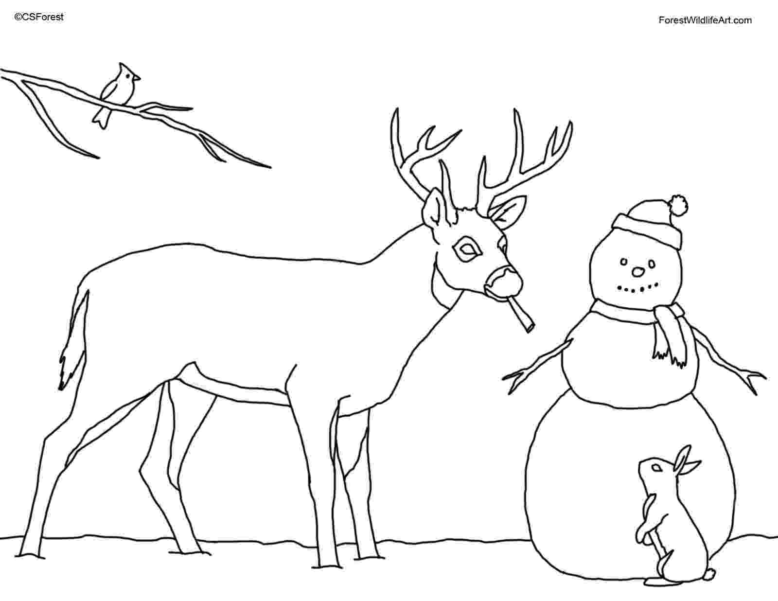 deer color pages for education new animal deer coloring pages deer pages color