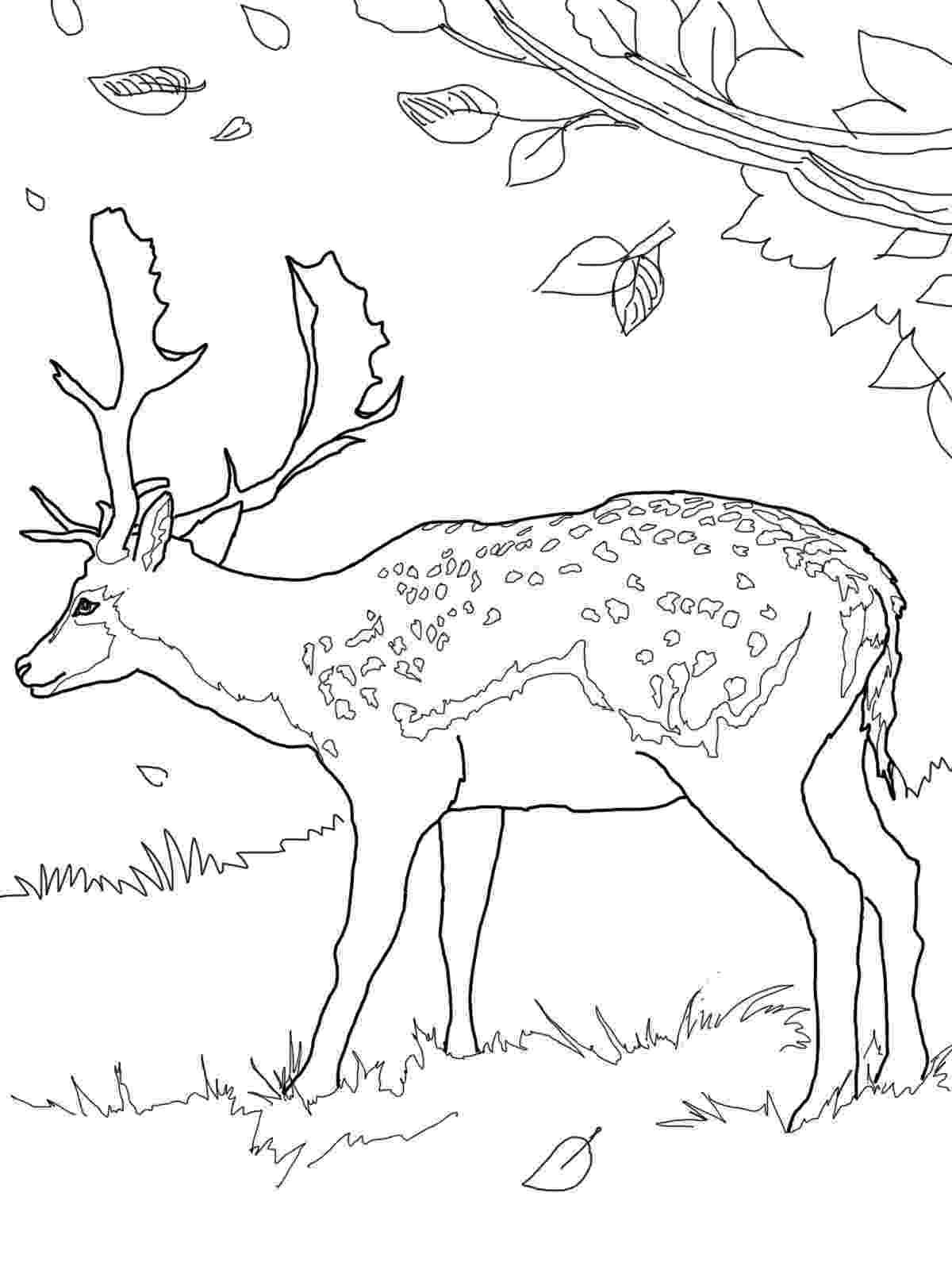 deer color pages free deer coloring pages deer color pages