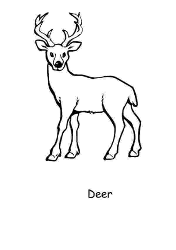 deer color pages free printable deer coloring pages for kids deer color pages