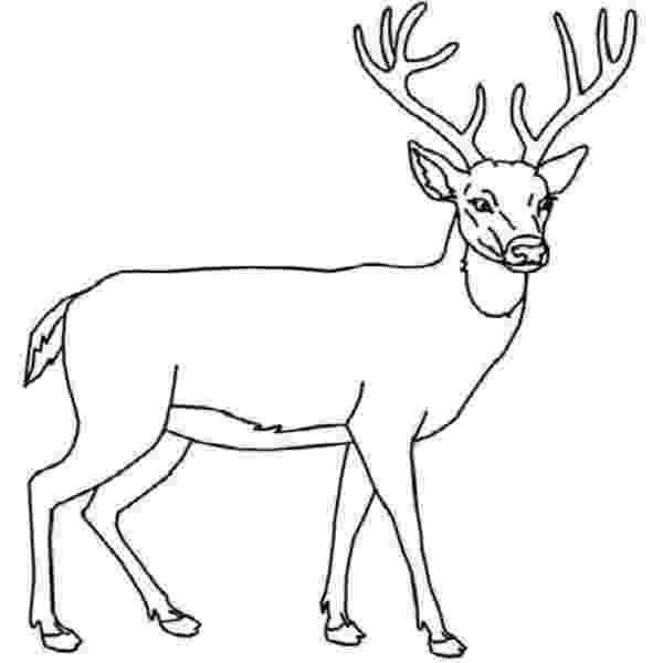 deer color pages free printable deer coloring pages for kids deer color pages 1 1