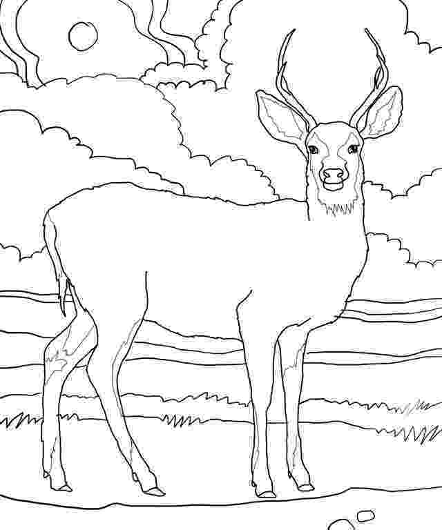 deer color pages free printable deer coloring pages for kids deer pages color