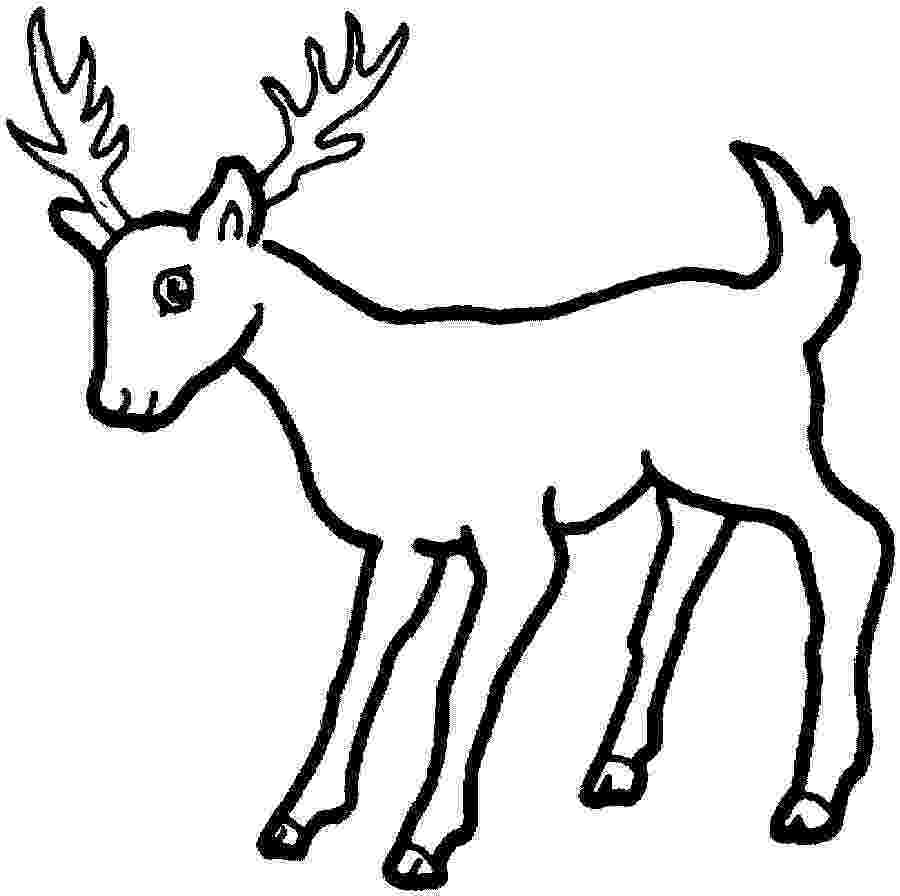 deer color pages free printable deer coloring pages for kids pages deer color 1 2