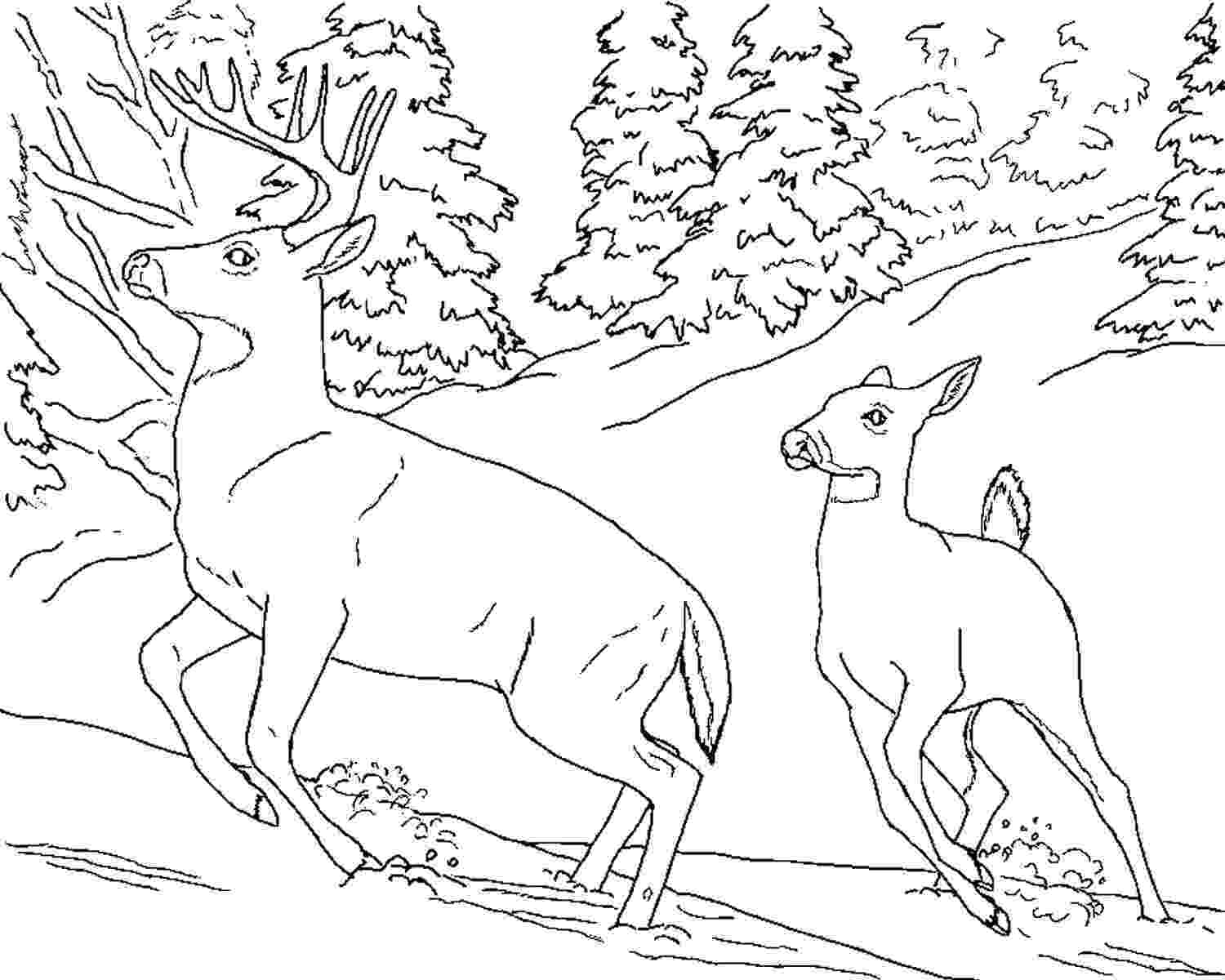 deer color pages print download deer coloring pages for totally pages color deer