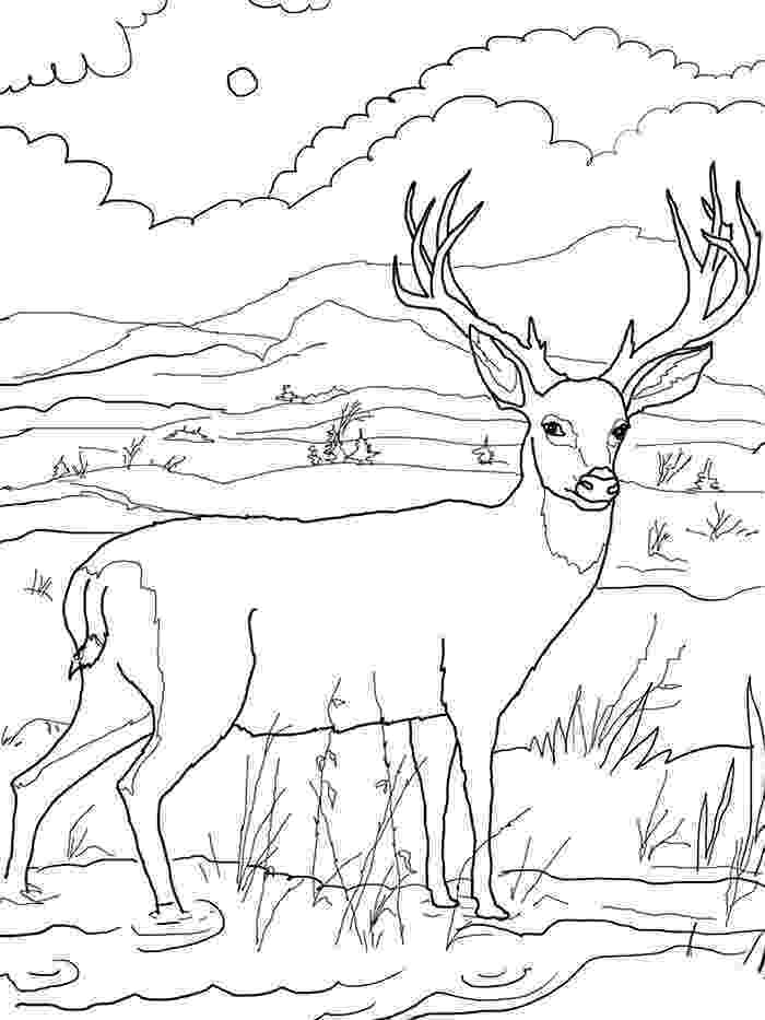 deer coloring sheet crista forest39s animals art 11112 12112 deer coloring sheet
