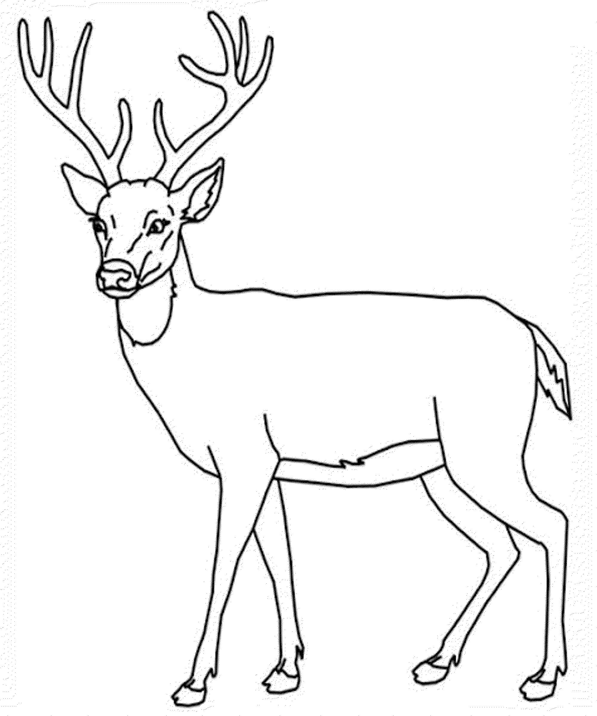 deer coloring sheet deer coloring pages kidsuki coloring sheet deer