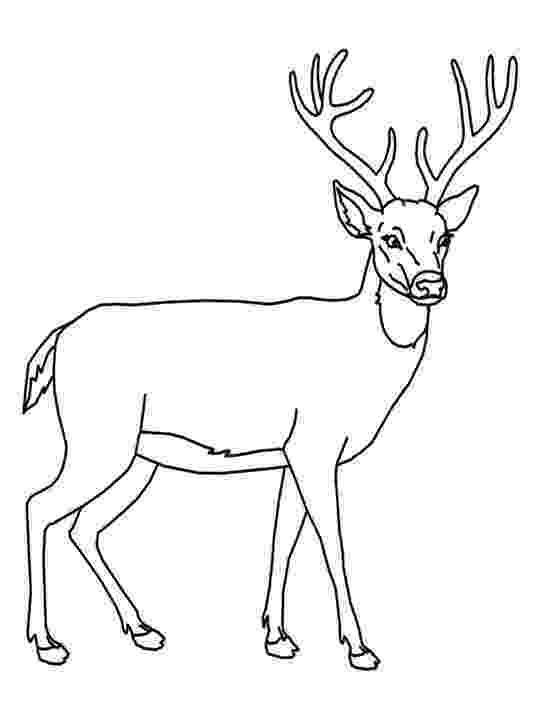 deer coloring sheet for education new animal deer coloring pages sheet deer coloring 1 1